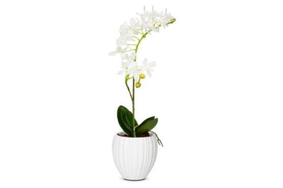 Vazonėlis gėlėms Lux