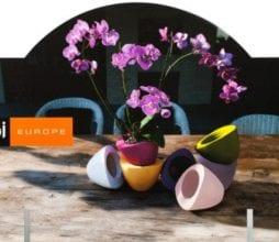 Vazonelis orchidejoms SUP Capi Europe bjarnumbaldai